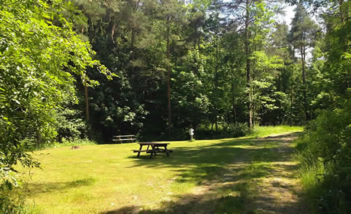 Color photo of secluded campsite with a picnic table.